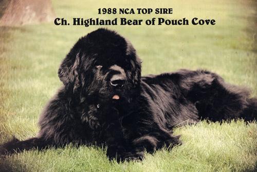 Highland Bear